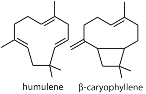 Figure 12: example of sesquiterpenes