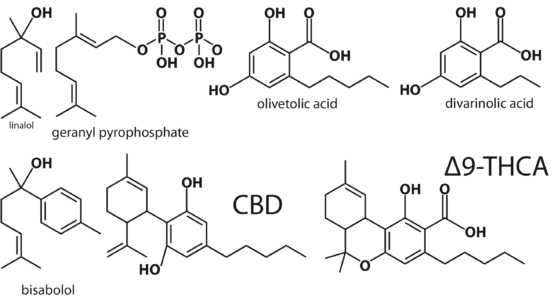 Figure 13: example of terpenoids