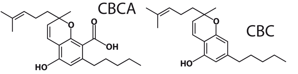 Figure 4: CBCA and CBC molecules.