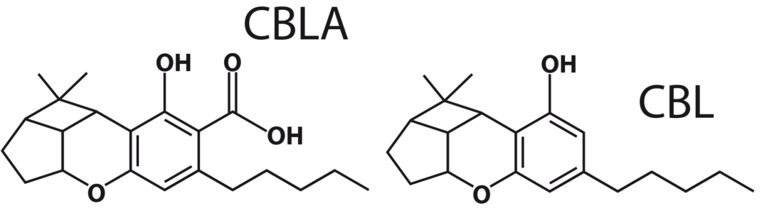 Figure 8: CBLA and CBL molecules.