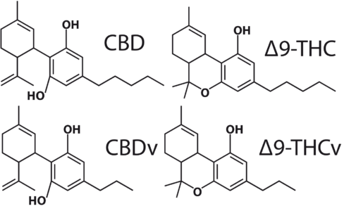 Figure 9: CBD, 9-THC, CBDv and Δ9-THCv molecules.